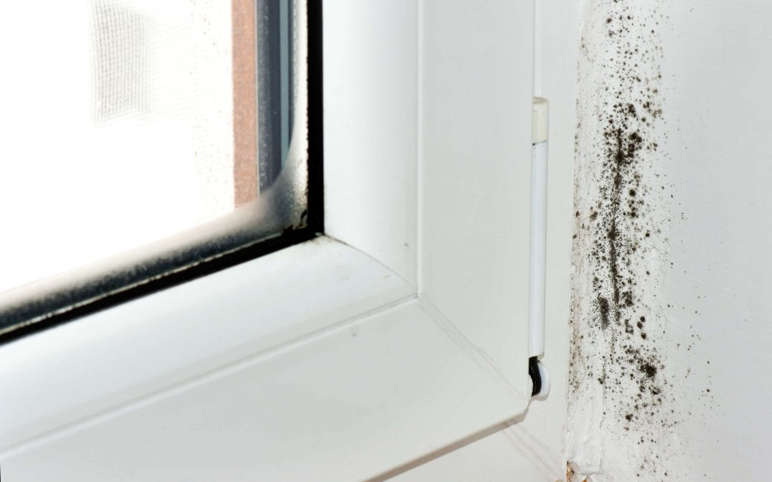 Five Tips for Preventing Mold Growth in Your Home